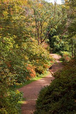 Surrey Trail