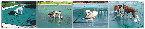 dogs-on-pool-covers.jpg