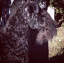 Kerry Blue Terrier Groomer San Diego