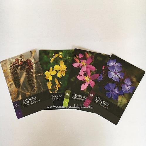 Tarjetas de Flores de Bach para niños