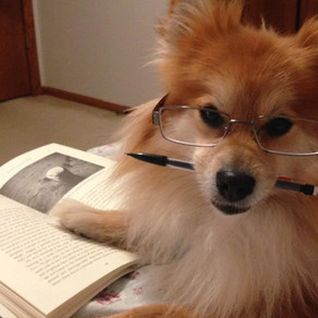 A Good Book is a Good Companion