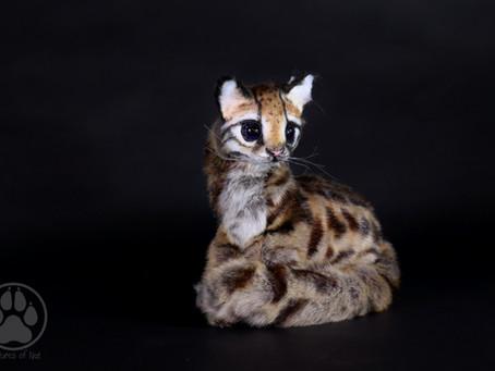 I Was Here - Inside Olis the Ocelot Kitten.