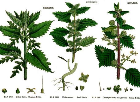 Wunderkammer Plant Guide - Kalatha  Region