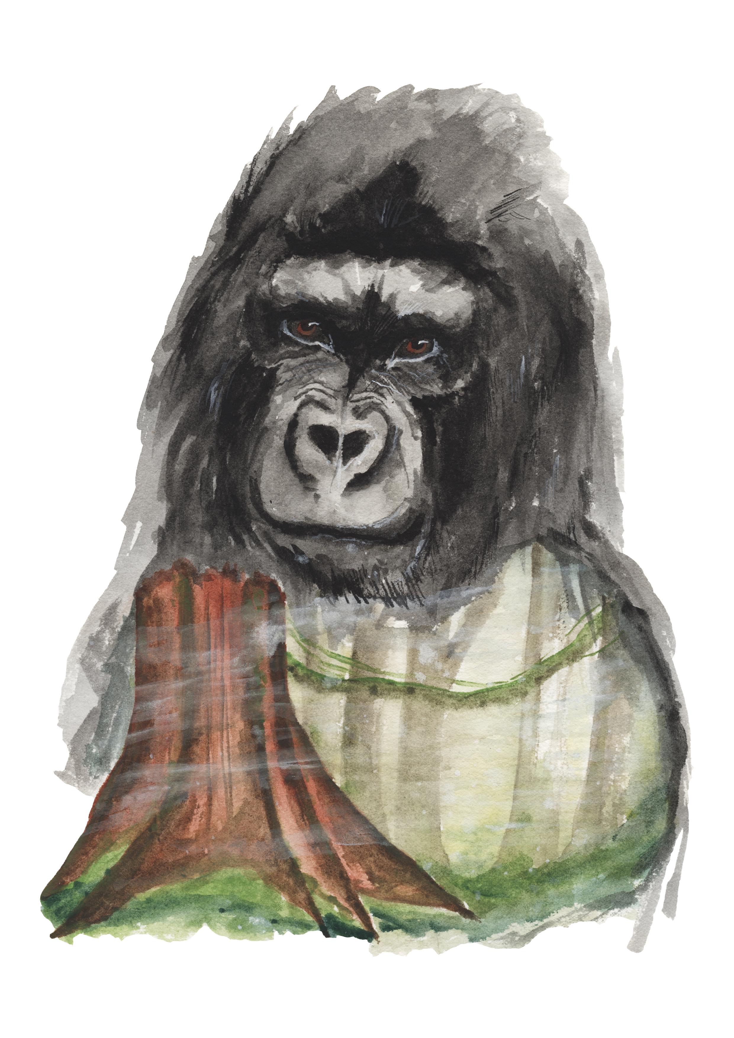 forest gorilla jpeg