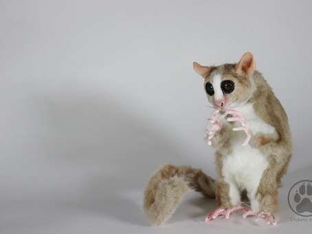 I Was Here - Mouse Lemur