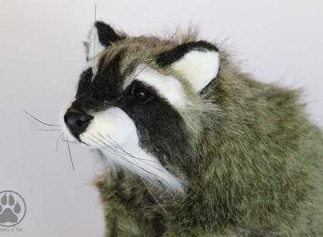Inside Buxbau the Moss Raccoon