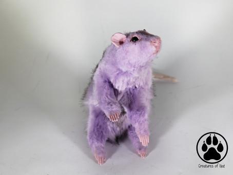 Inside Syringa the Lilac Rat