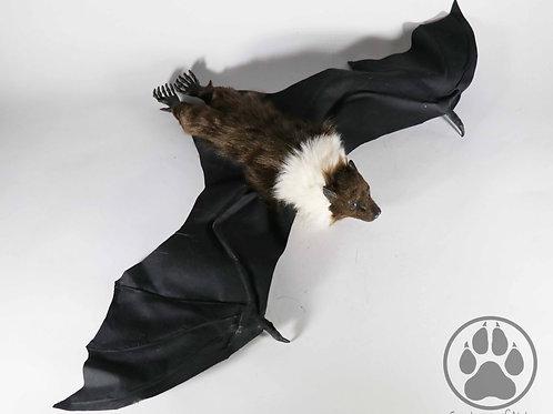 Brown and Cream Flying Fox Artdoll