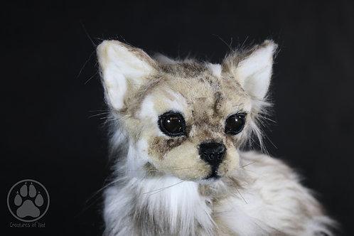 Ren the chihuahua - Artdoll OOAK
