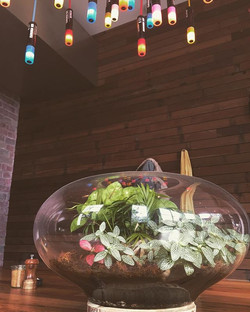 ❤️❤️❤️ our beautiful terrarium ☘🌱🍀🌱 and of course our famous posca pendant__#twobirdscafe #cafede