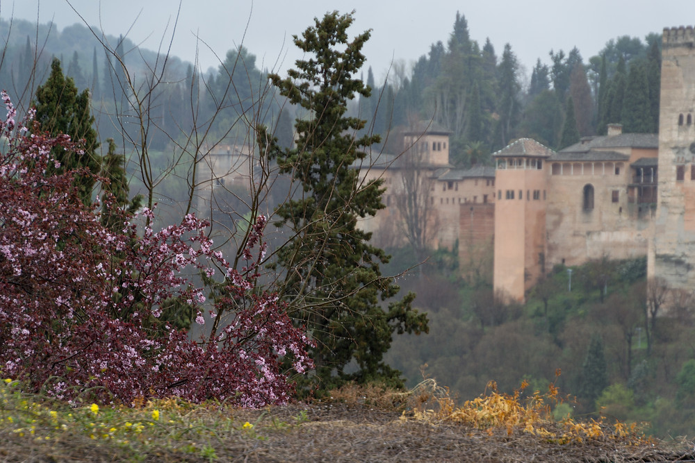Amazing view of the Alhambra from the museum!
