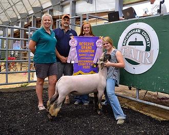 Ella Warns- Reserve Champion Market Lamb