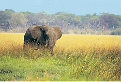 1Elephang.png