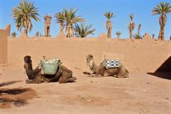 Oasis dans le désert