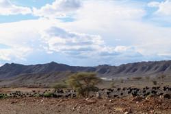 Trek Maroc montagne Saghro