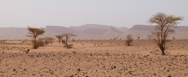 Désert Maroc trek