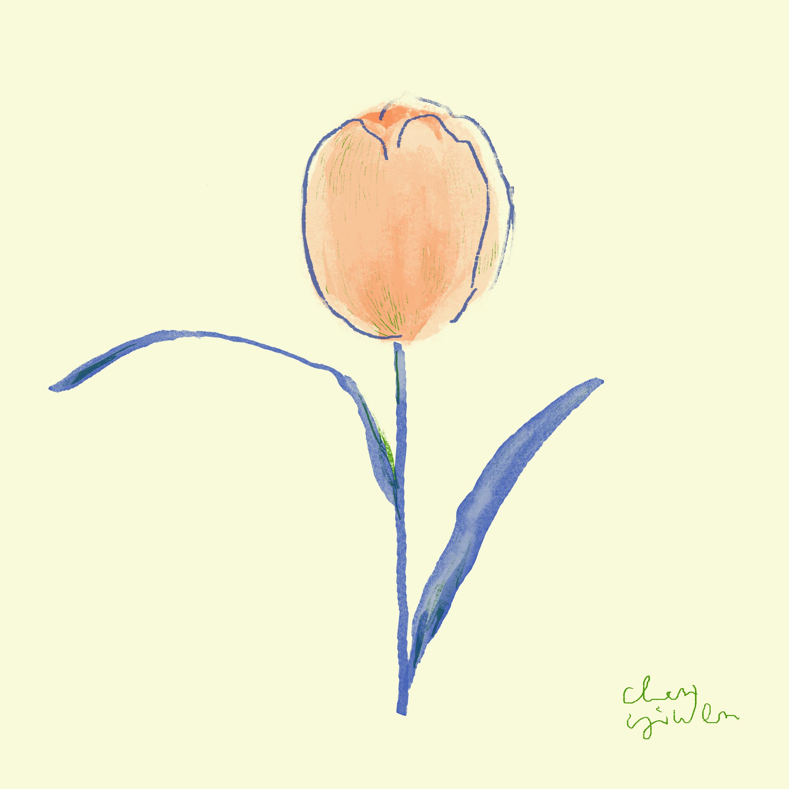 study tulip