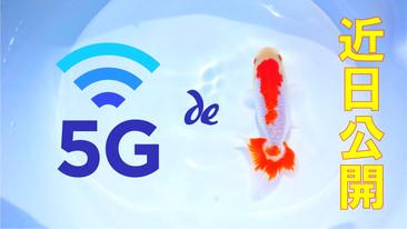 「5G × 金魚」 近日公開!