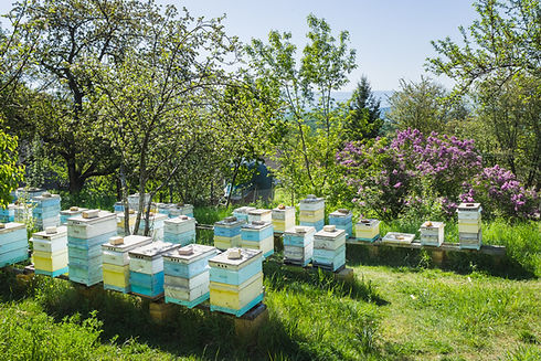 apiary in mountains..jpg
