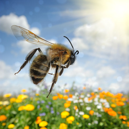 Bee flying over colorful flower field at