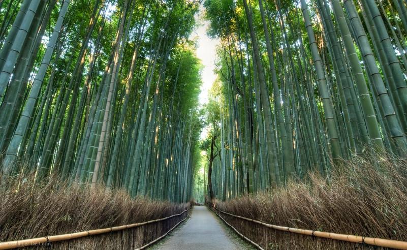 La foresta Arashiyama