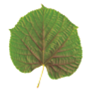 feuille-Phytocosmo.png