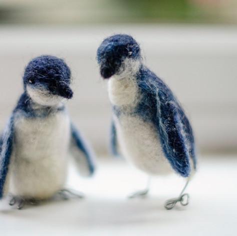 Phillip Island Penguins