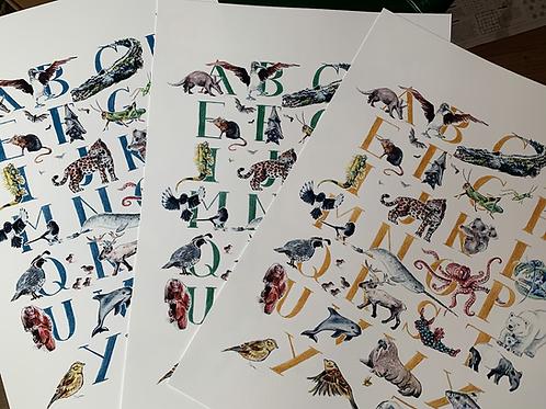 Animal, Alphabet Print