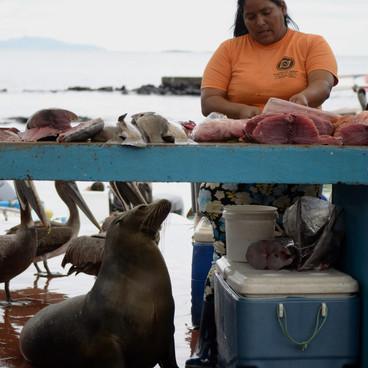 Santa Cruz, Galapagos Islands, Ecuador 2018