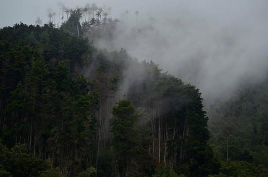 Cocora Valley, Colombia 2018
