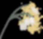 fr%C3%83%C2%BChlingsblume02_Zeichenfl%C3