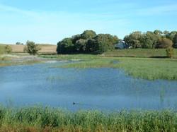 Photo 2 Wetland.jpg