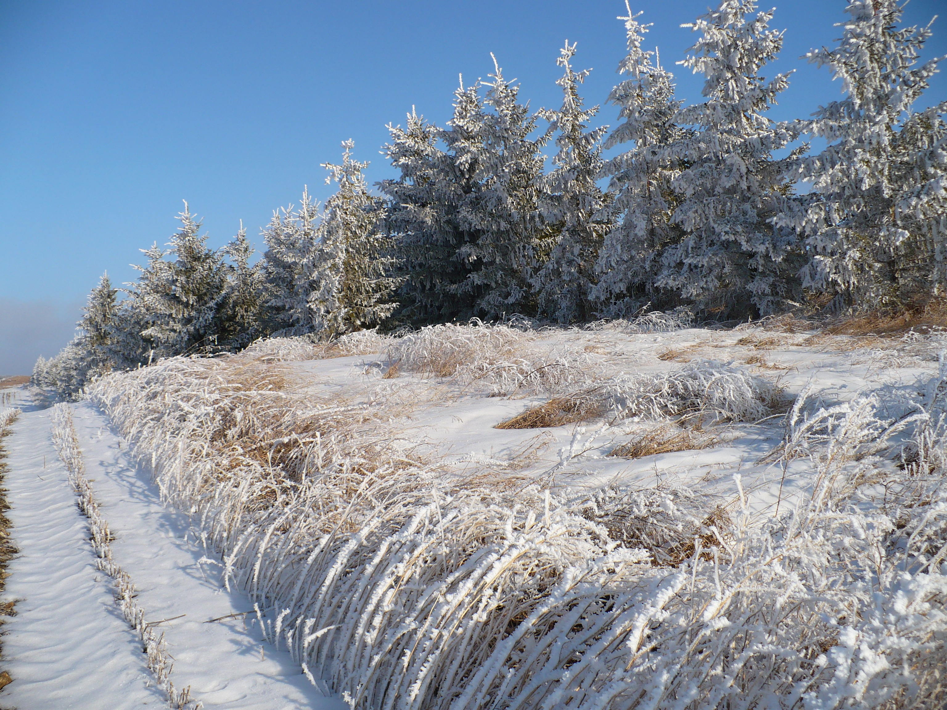 Jan-Forbord-winter buffer.JPG