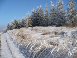 Jan-Forbord-winter buffer.JPG