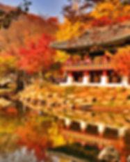 KOREA + KPOP copy.jpg