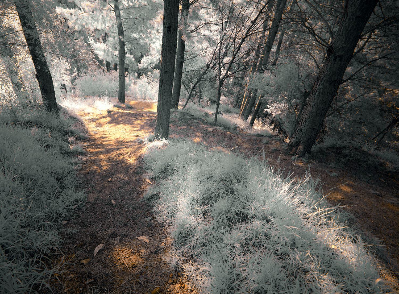 Peter Dunbar - Infrared 01