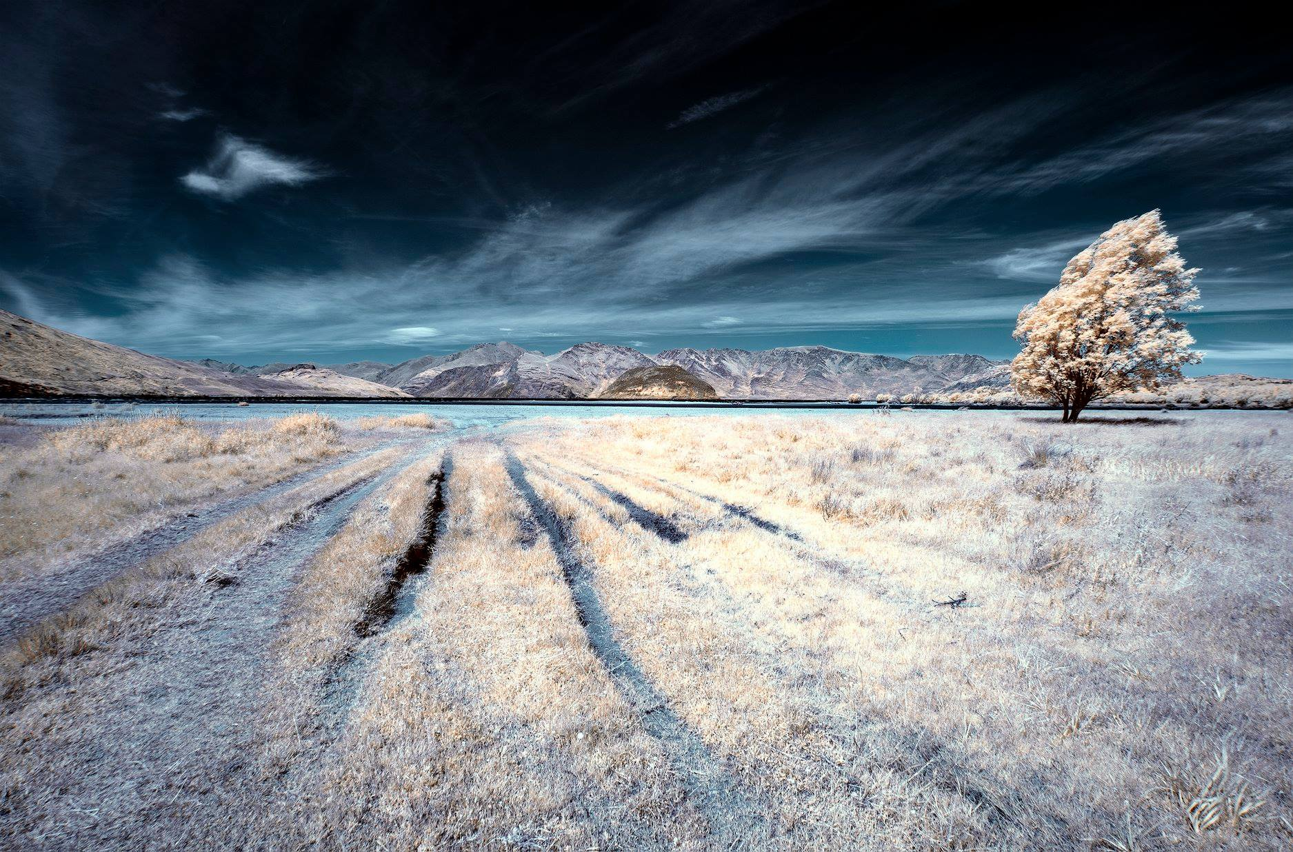 Peter Dunbar - Infrared 03