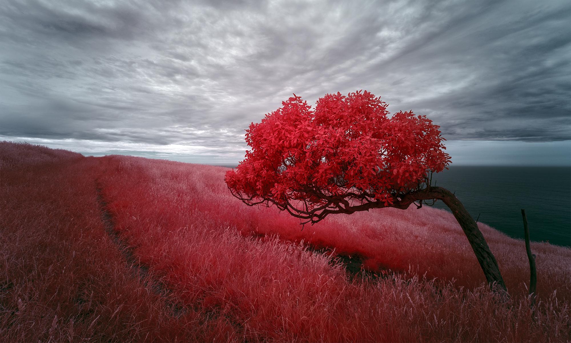 Peter Dunbar - Infrared 08