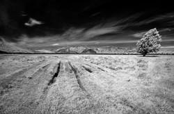 Peter Dunbar - Infrared 05