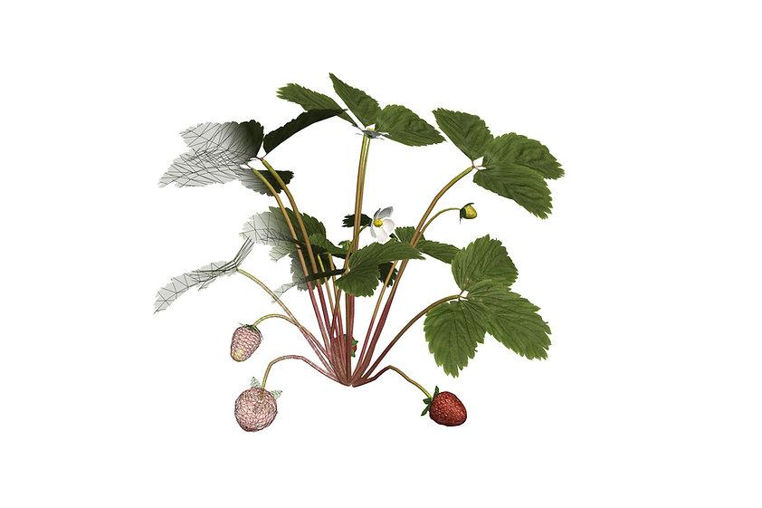 Strawberry plant infografy 3D vision system
