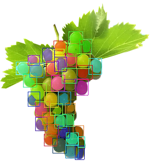 Segmentacion uvas.png