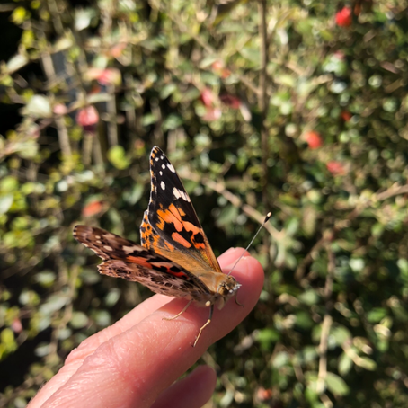 Our butterfly experience