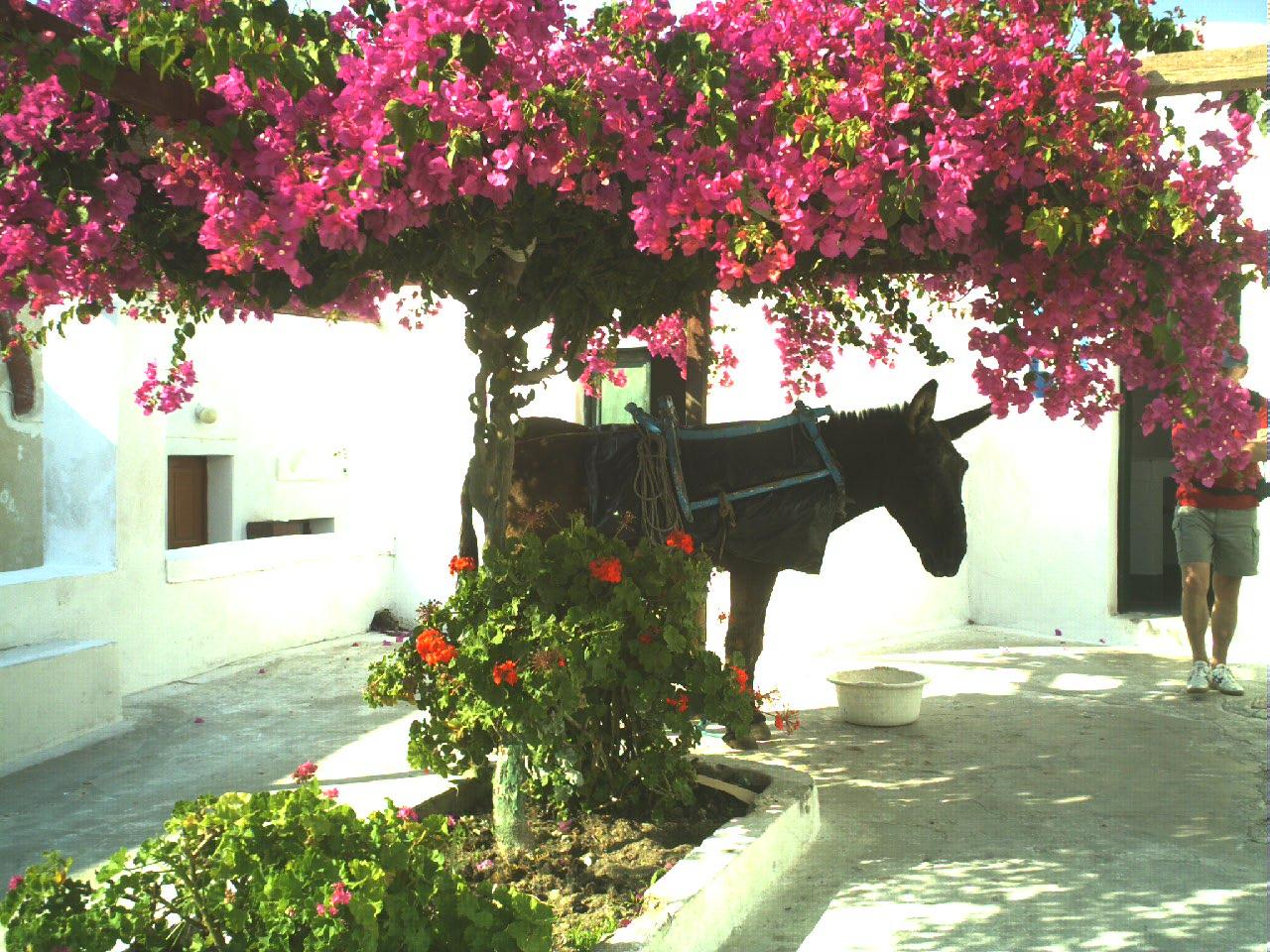 Ile_de_Santorin-Grèce