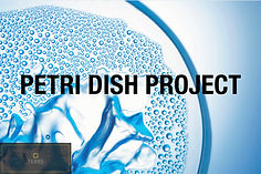 Petri dish Project physical exhibition