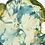 Thumbnail: Sea Lettuce