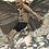 Thumbnail: Oblivion: What Flies Amongst Us