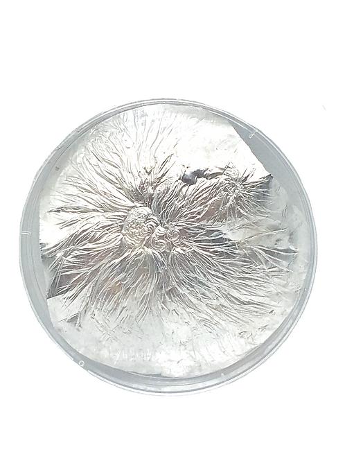 Mycelium Networks #1
