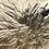 Thumbnail: Mycelium Networks #1