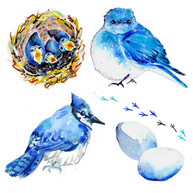 Bluebirds of Paradise