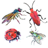 Colorful Bugs Illustration